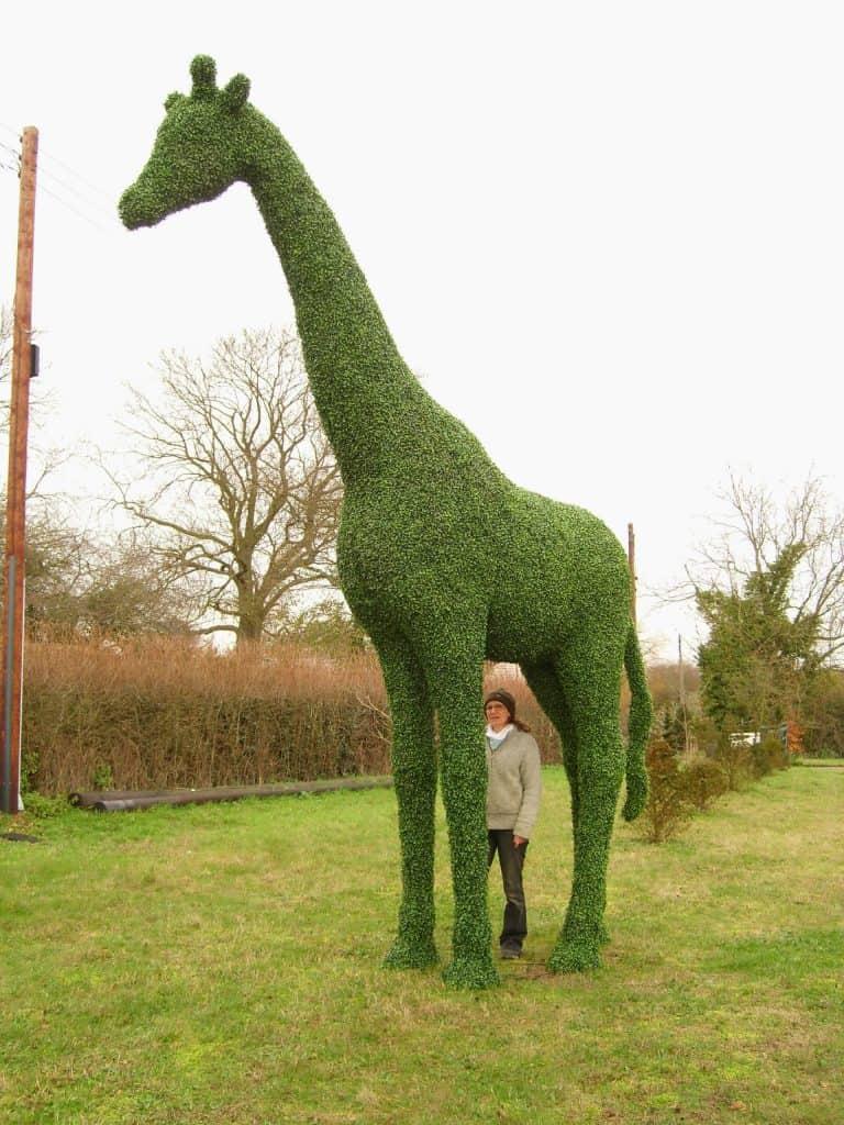 Topiary Giraffe 2