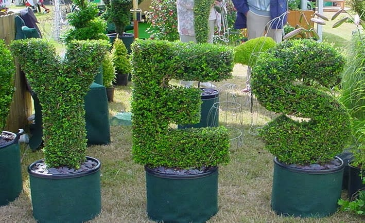 Yes Topiary