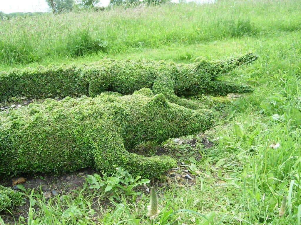 Crocodile Topiaries in boxwood with Topiary frames By Topiary Art Designs