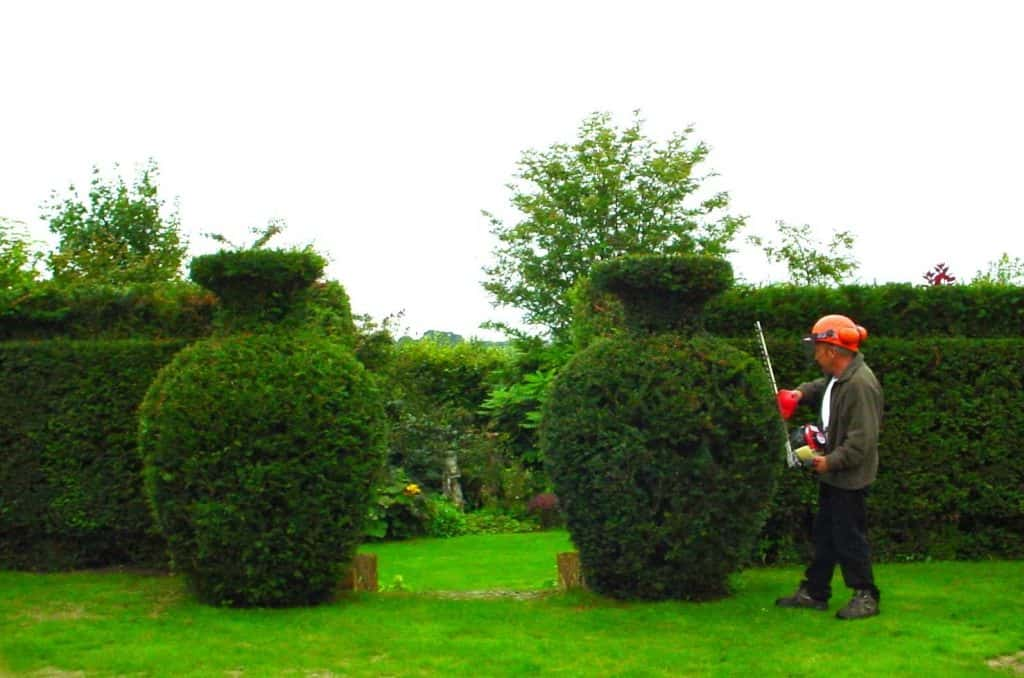 Topiary Urns by Topiary Art Designs cutting and shaping Yew trees