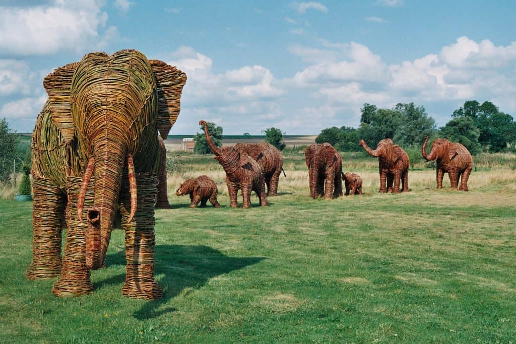 Willow wicker and woven Elephant Herd sculptures for Elephant Family Charity