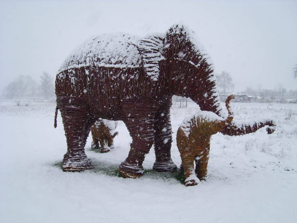 Willow wicker woven elephants in the snow by Topiary Art Designs