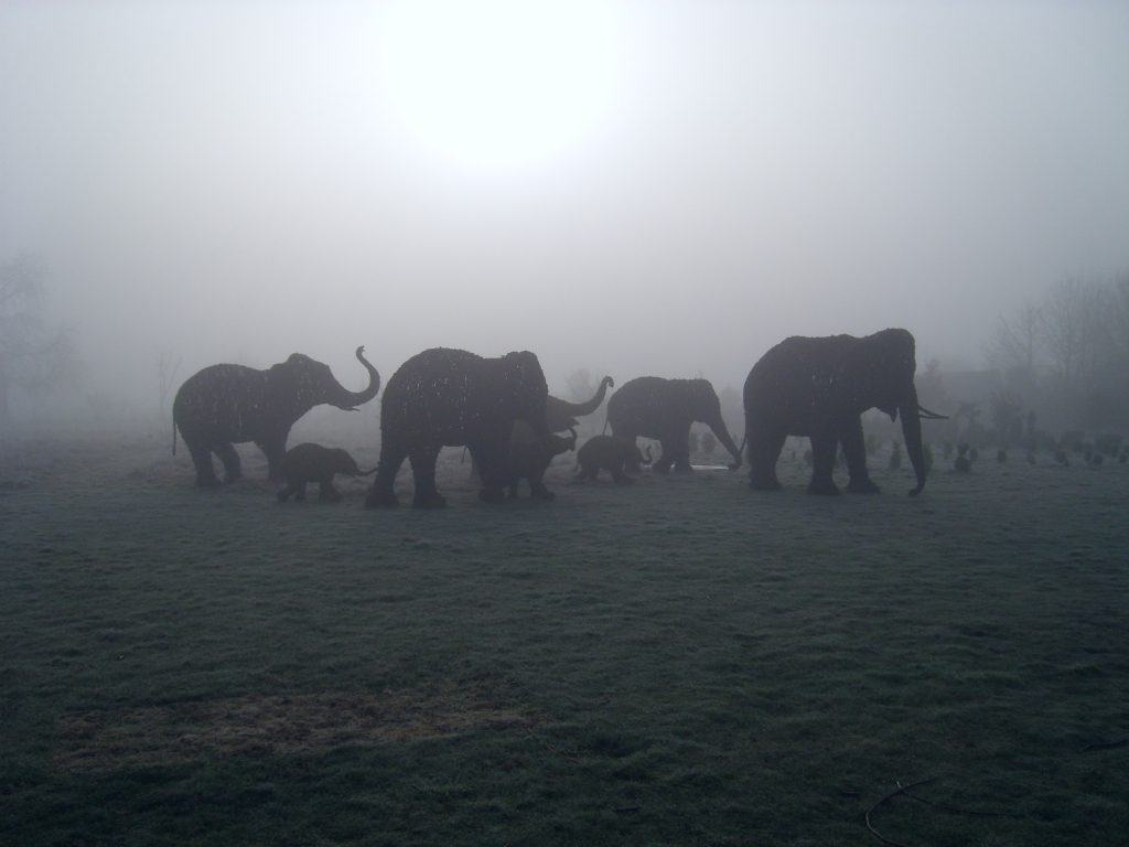 Willow wicker Elephant Herd in mist