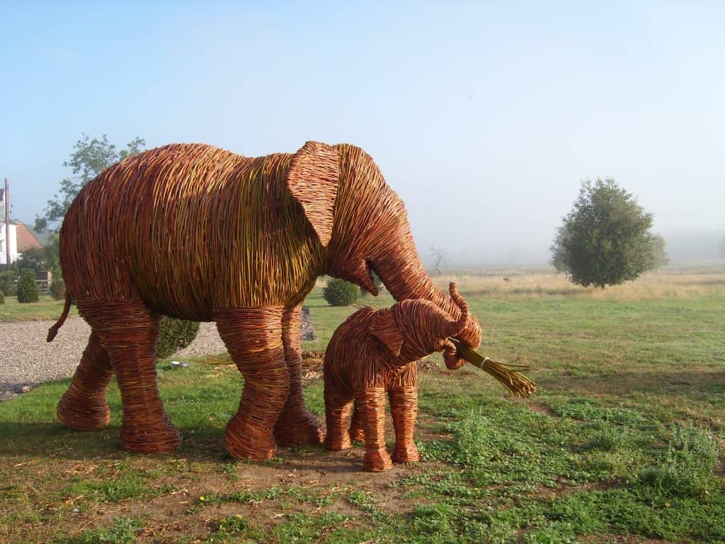 Willow Female and baby Elephants