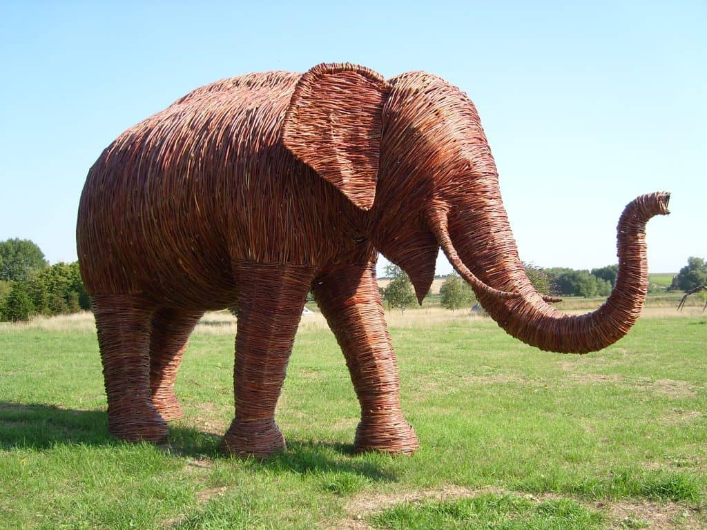 Willow Male Elephant